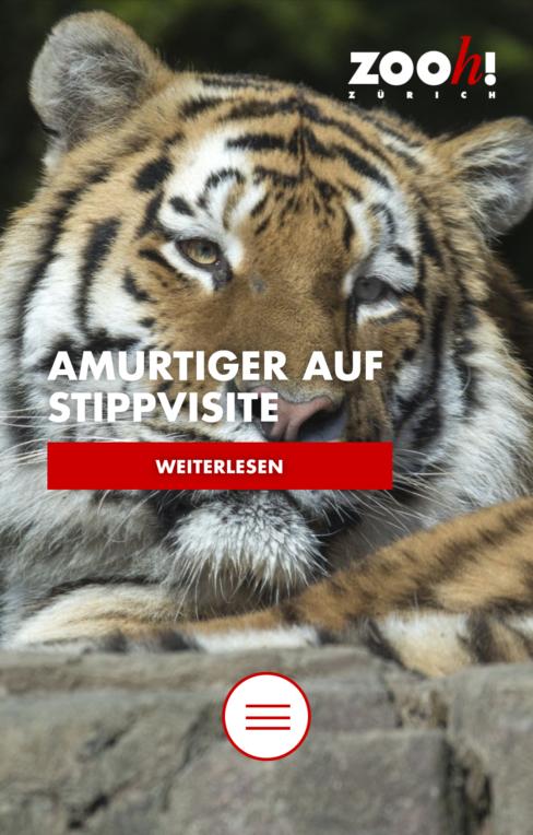 Screenshot von zoo.ch auf dem Smartphone